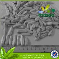 Chinese organic hybrid white sunflower seeds packag