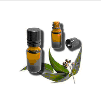 Distilation Eucalyptus Oil