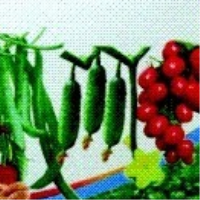 Jia Gaibao
