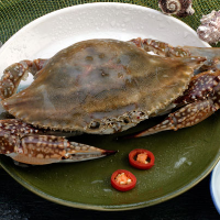 swimming crab seafood