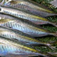 Frozen horse mackerel head off