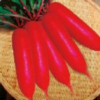 red radish seed