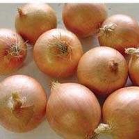 Huang Hun No.1 hybrid onion seed