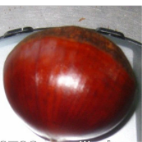 buy price chestnuts,health food and nut