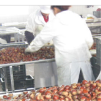 buy price chestnuts,health food