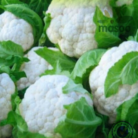New 2014 crop Chinese Organic Fresh Cauliflowers With Best Price For Sale