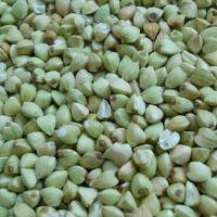 new green buckwheat