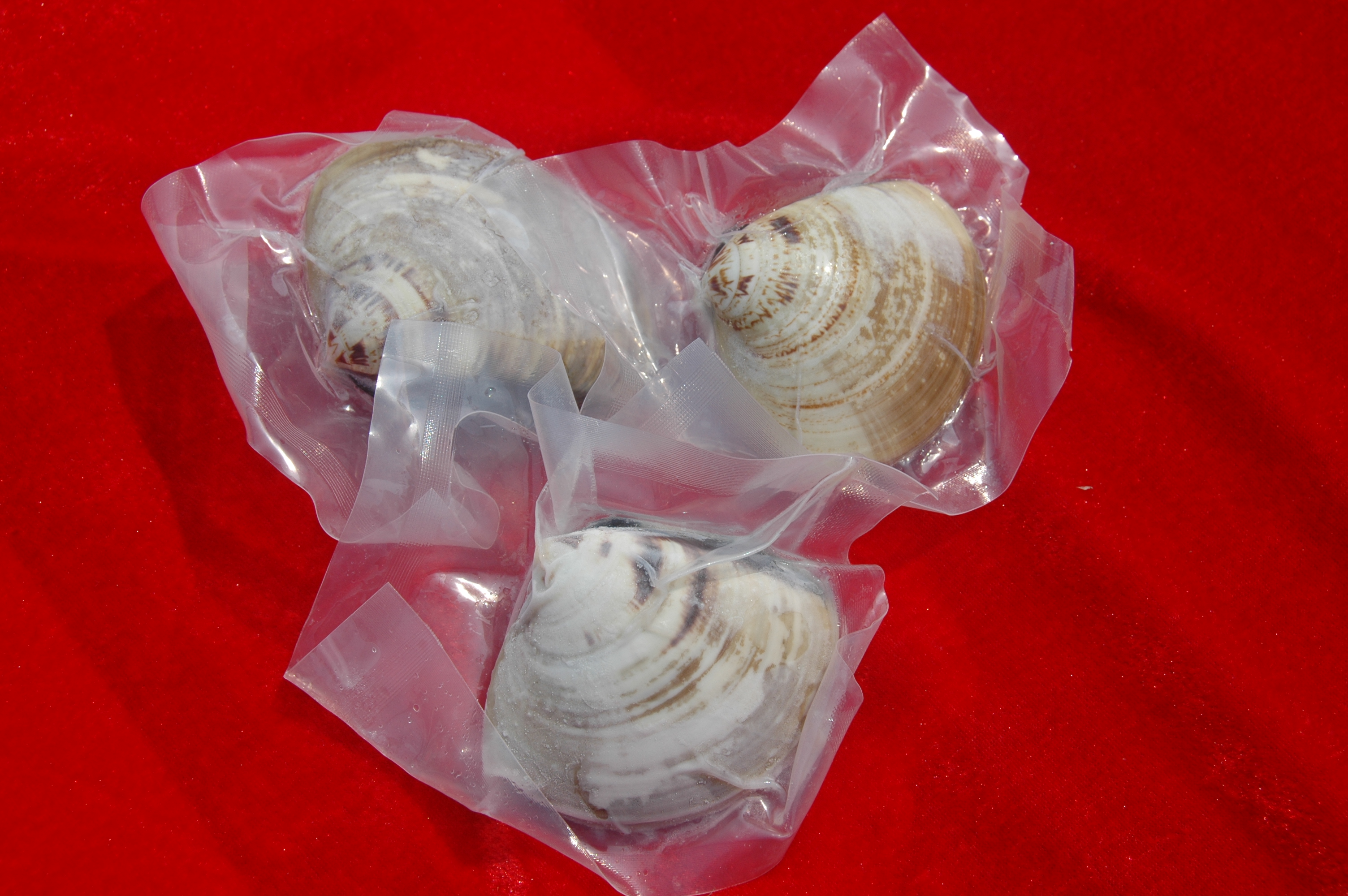 hard shell clam on sale