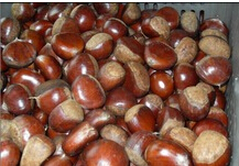 SWEET, FRESH CHESTNUT