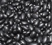 Black Kidney Bean