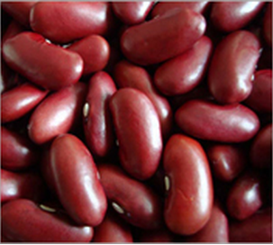 Red Kidney Bean British Type