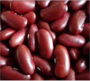Red Kidney Bean British Type