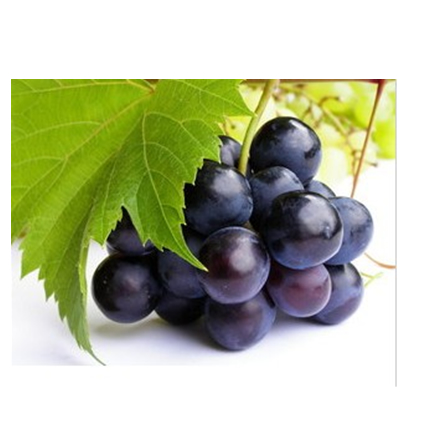 Highquality grape seeding
