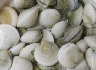frozen short necked clam