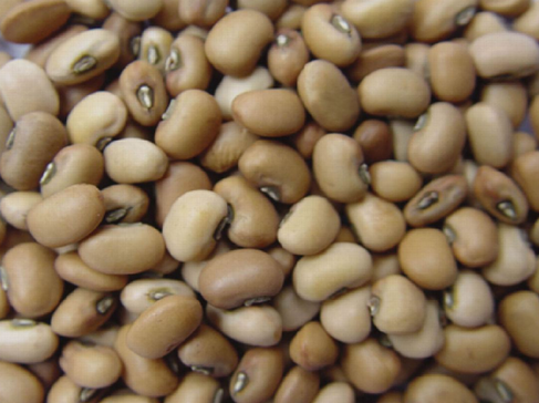 Pink Cowpea