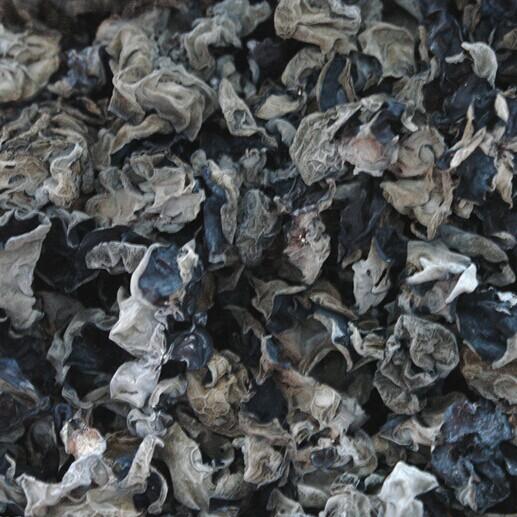 Organic edible black fungus mushroom