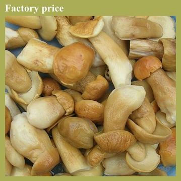 WILD porcini mushrooms