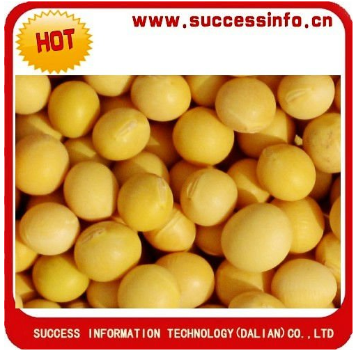 Yelllow Soybean