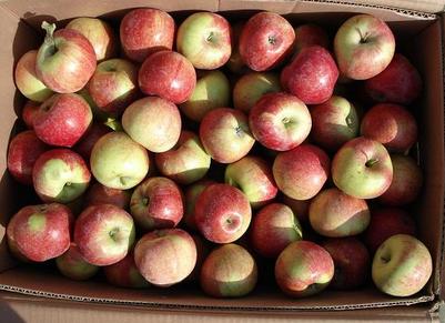 Fresh Apple (100-252)