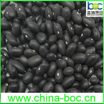 Wholesale large black kidney beans