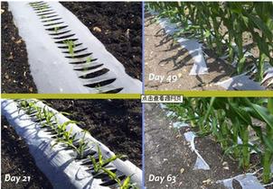agriculture plastic mulch film