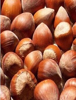 Organic fresh chinese chestnut/chestnut