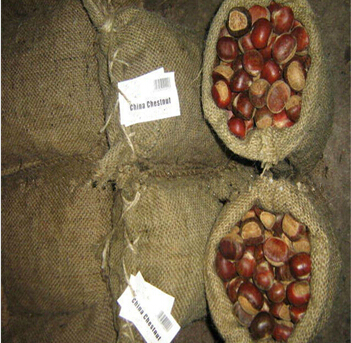 Fresh and good price chinese chestnut/chestnut