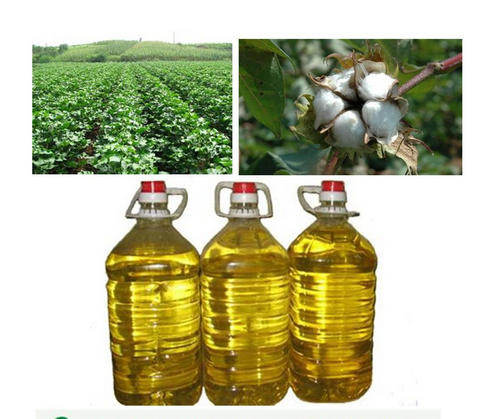 Contton seed oil with best quality
