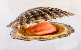 wholesale scallop