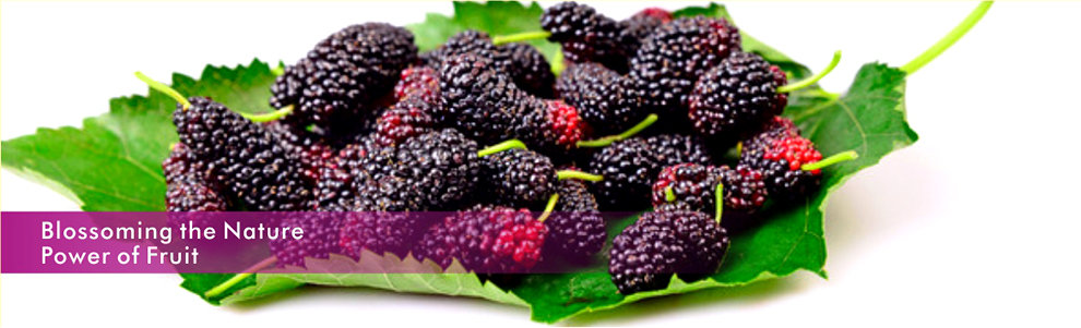 Black Mulberry Dried Fruit 15672