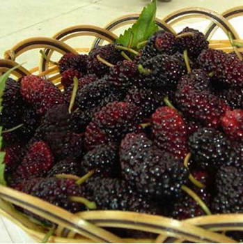 Whole Dried  Black Mulberry