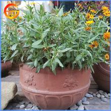 Classical terracotta pots