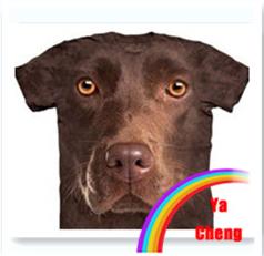 latest 3D T shirt short sleeve animal t shirt 100% polyester round neck t shirt