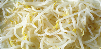 425g/12 canned bean sprouts with low price bean sprout for top quality chinese bean sprouts