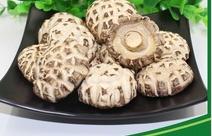 mushroom logs