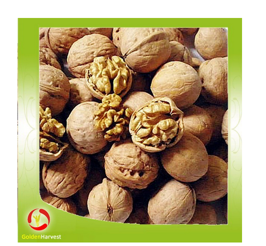 Wholesale walnut in shell walnut kernels light halves