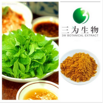 Hot Natural Product Peppermint extract from GMP Manufacturer