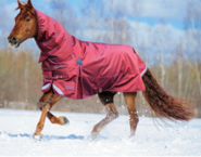 Hot Sale Waterproof horse rug for Winter