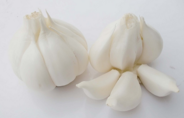 2014 crop pure white garlic