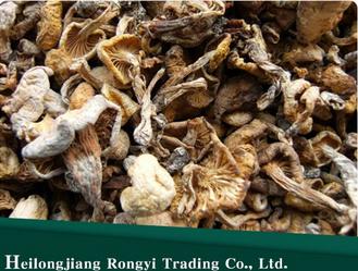 Pleurotus Citrinopileatus Mushroom For Sale