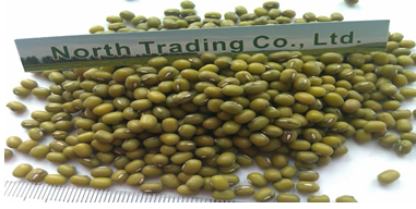 Organic Green Mung Bean( sprouting type, New crop, hand-picked)