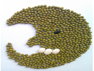 Green Mung Bean ( Sprouting type,2011 crop, jilin origin, hps)