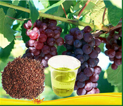 100% purity Grape Seed oil