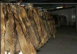 hot sale raccoon dog fur 2014 popular
