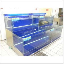 Display fish tank
