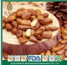 Manufacturer of Siberian Open Pine Nuts in Shell