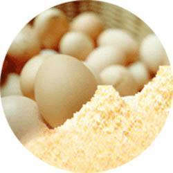 Egg albumin powder