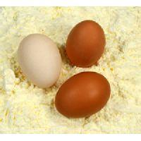 Egg albumin powder