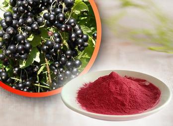 Blackcurrant Juice Powder