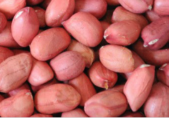 New crop chinese red skin peanut kernels
